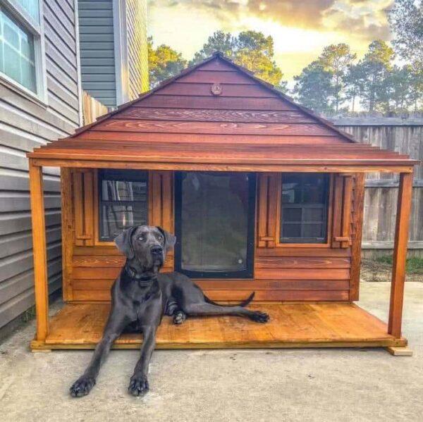 Oakley the Great Dane enjoying his Goliath dog house