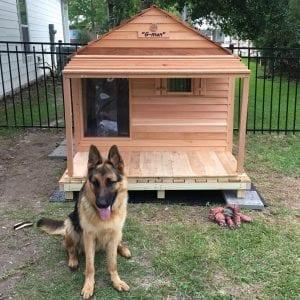 Godzilla dog house