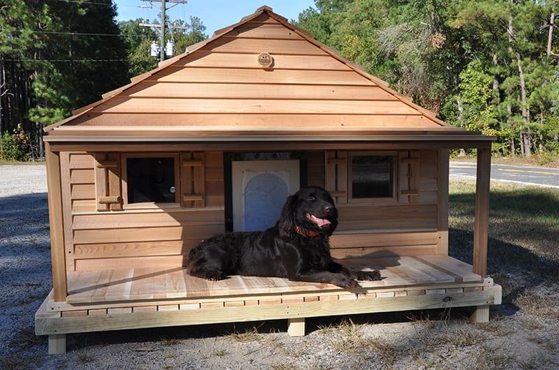 PorchDeck-Dog