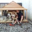 Alaskan Malamutes in their Goliath dog house