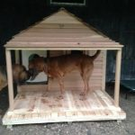 img-giant-dog-house-cropped_150_150