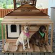 Mocha and Bailey Labs in their dog house